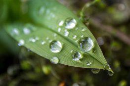 Systemy nawadniania – ogrodniczy problem z głowy