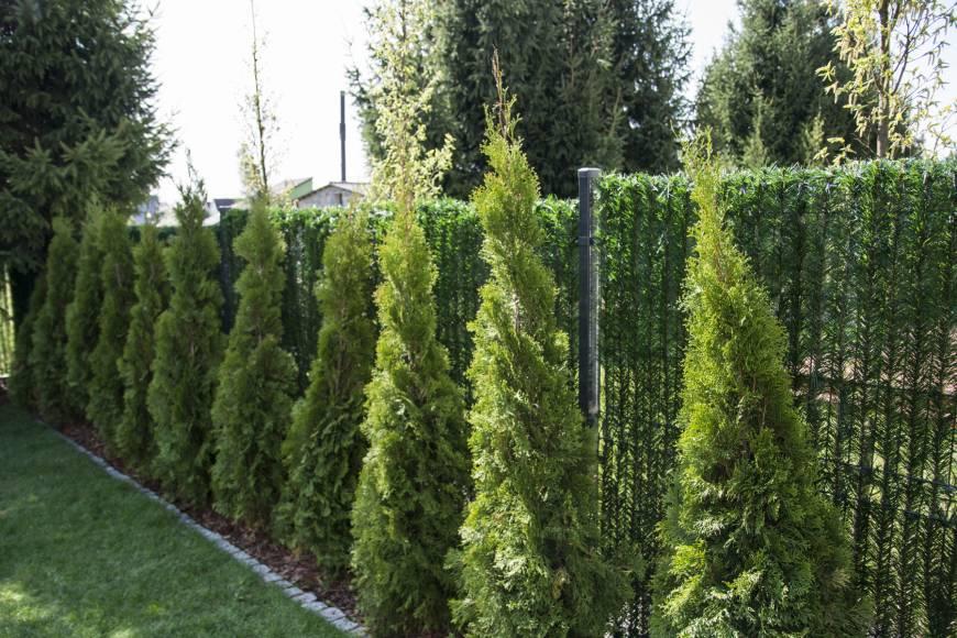 greenfences-oslona-na-ogrodzenie-zielony-plot