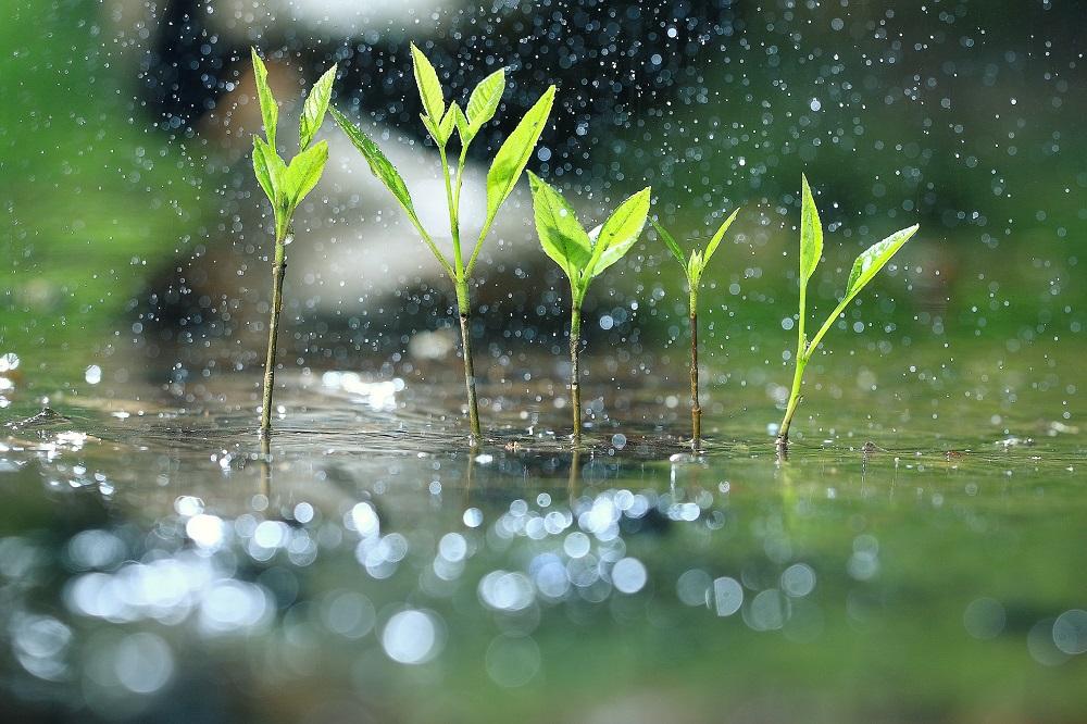 Naturalny zbiornik retencyjny dla deszczówki - ogród deszczowy.