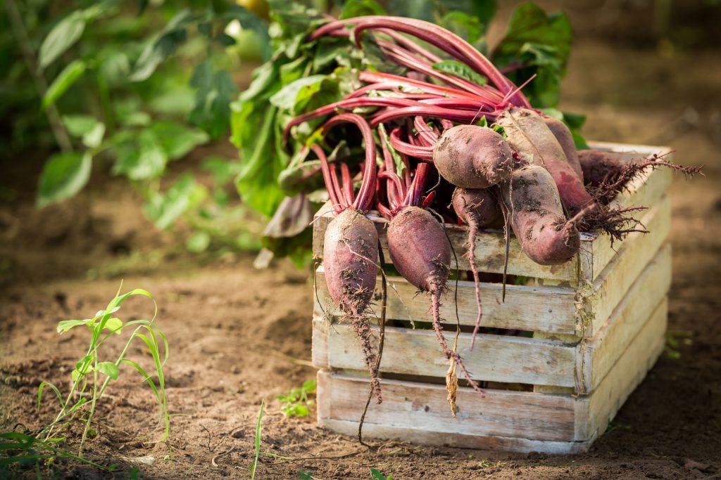 Skrzynki drewniane (nie) tylko na owoce – najpopularniejsze pomysły na aranżacje do domu i ogrodu 2