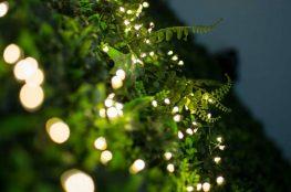 Święta w ogrodzie – jak udekorować dom i ogród na Boże Narodzenie