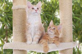 Koty na drapaku z liny sizalowej