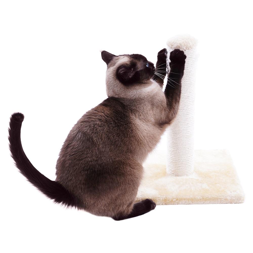 Drapak dla kota jak zrobić krok po kroku Blog Jumbo Shop