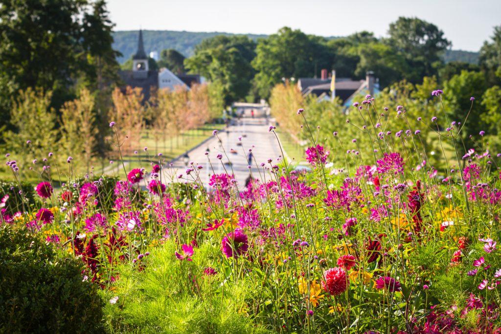 łąka-kwiaty-miasto-trawa-park