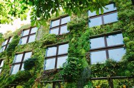 Poradnik eko-mieszczucha: jak żyć ekologicznie w mieście?