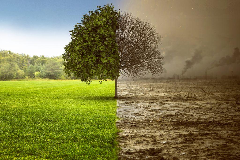 drzewo-natura-pustynia-ekologia-środowisko