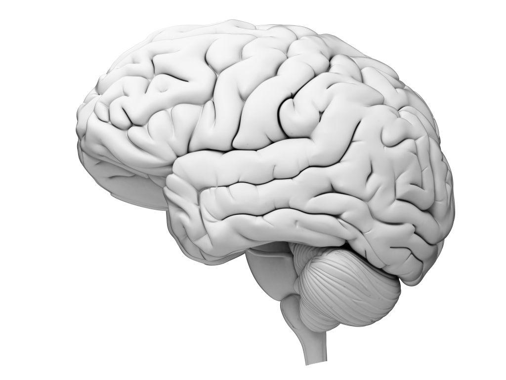mózg-anatomia-neurobiologia