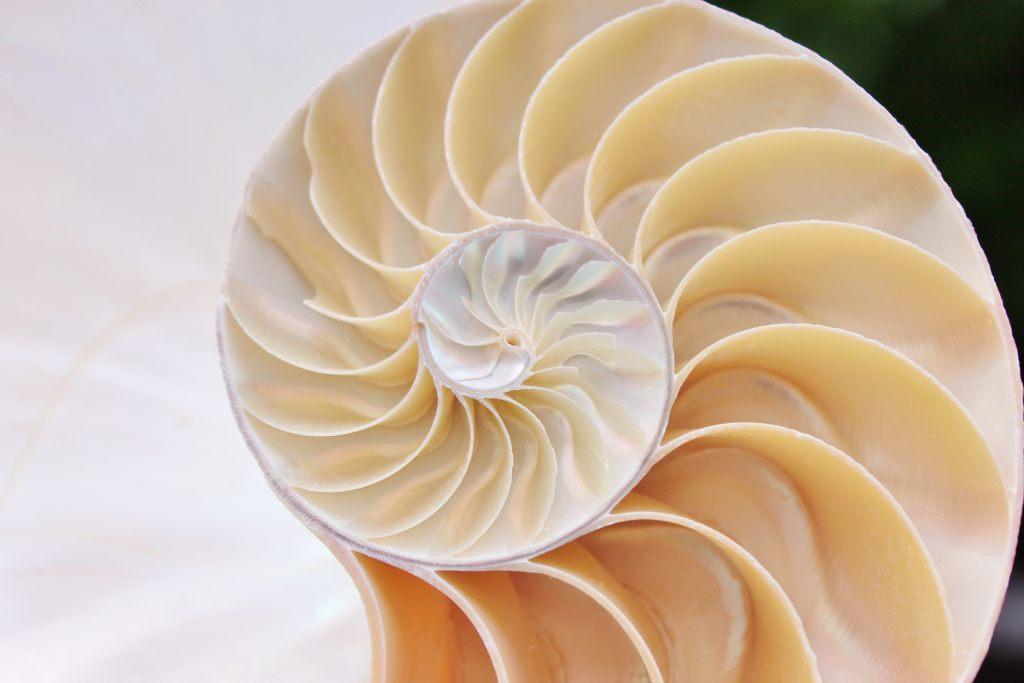 Symetryczna muszla