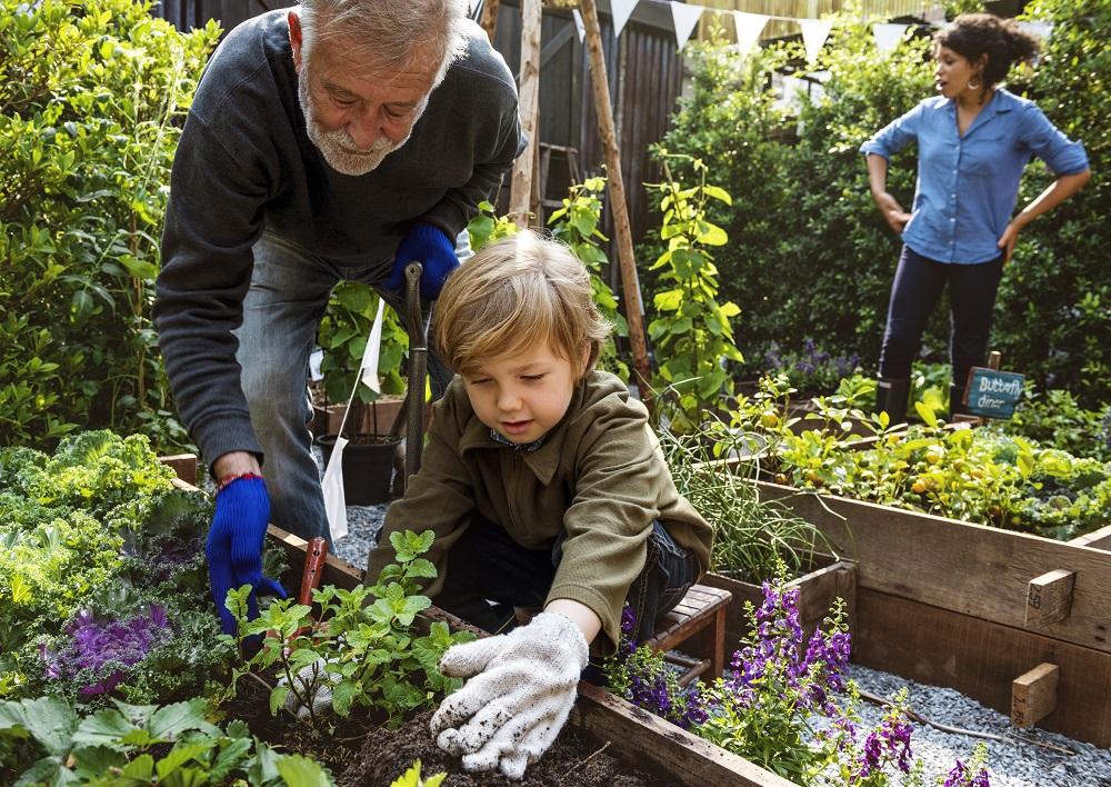 Rodzina sadzi rośliny w ogrodzie
