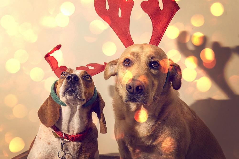 Psy w świątecznych opaskach