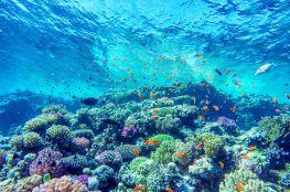 Dwa oblicza rafy koralowej – Pantone wskazuje trendy