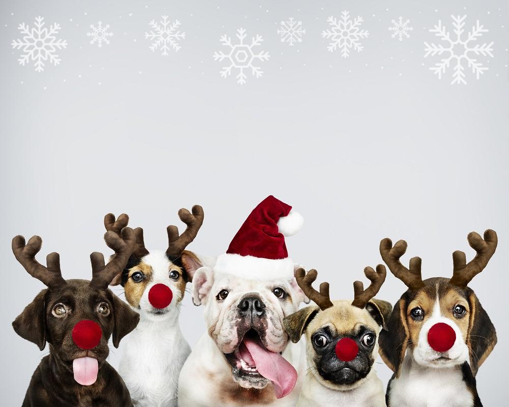 Szczeniaki w świątecznych czapkach