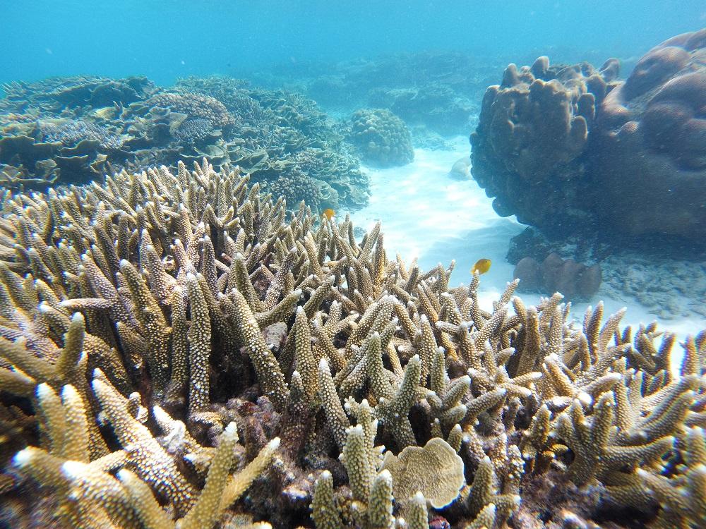 Umierająca rafa koralowa.