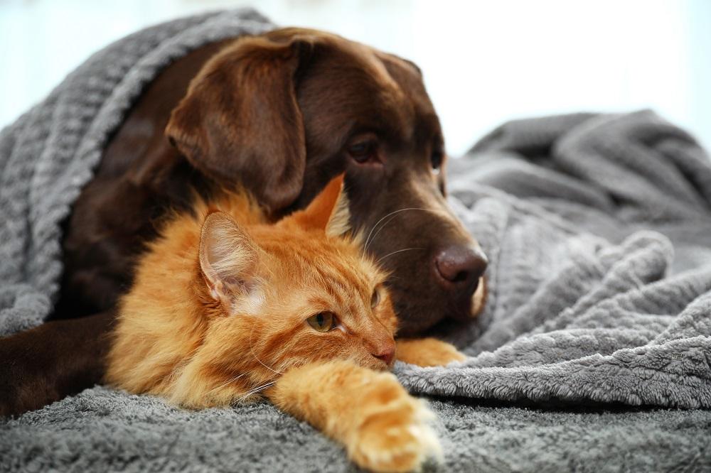 Pies i kot pod kocykiem