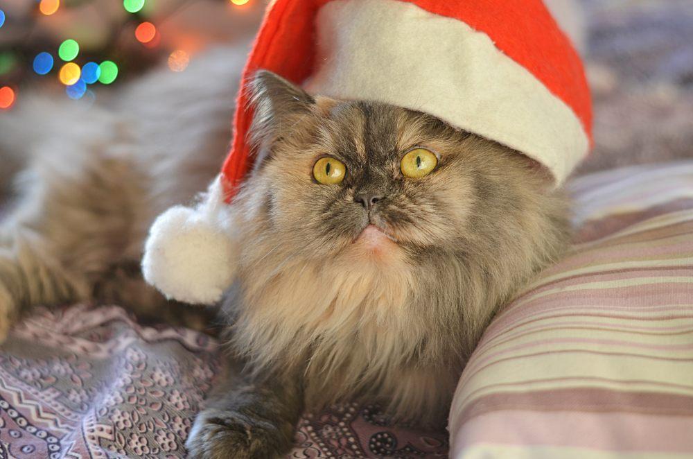 kot-przebranie-swiateczne