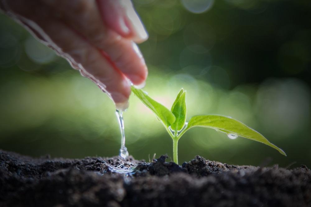 Roślina podlewana przez dłoń