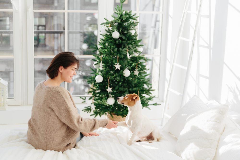 prezent-pies-czlowiek-choinka