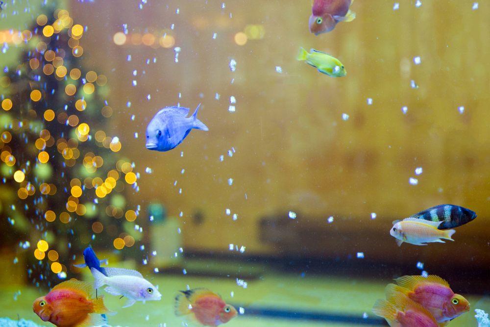 choinka-akwarium-bogactwo-1