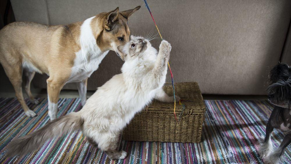 bawiacy-sie-kot