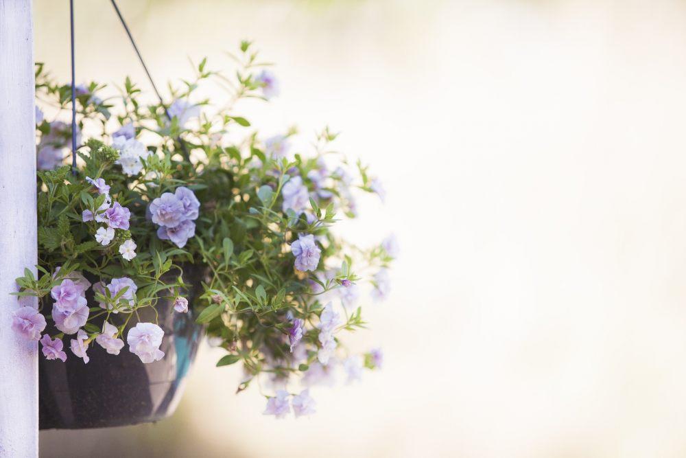 wiszacy-kwiatek