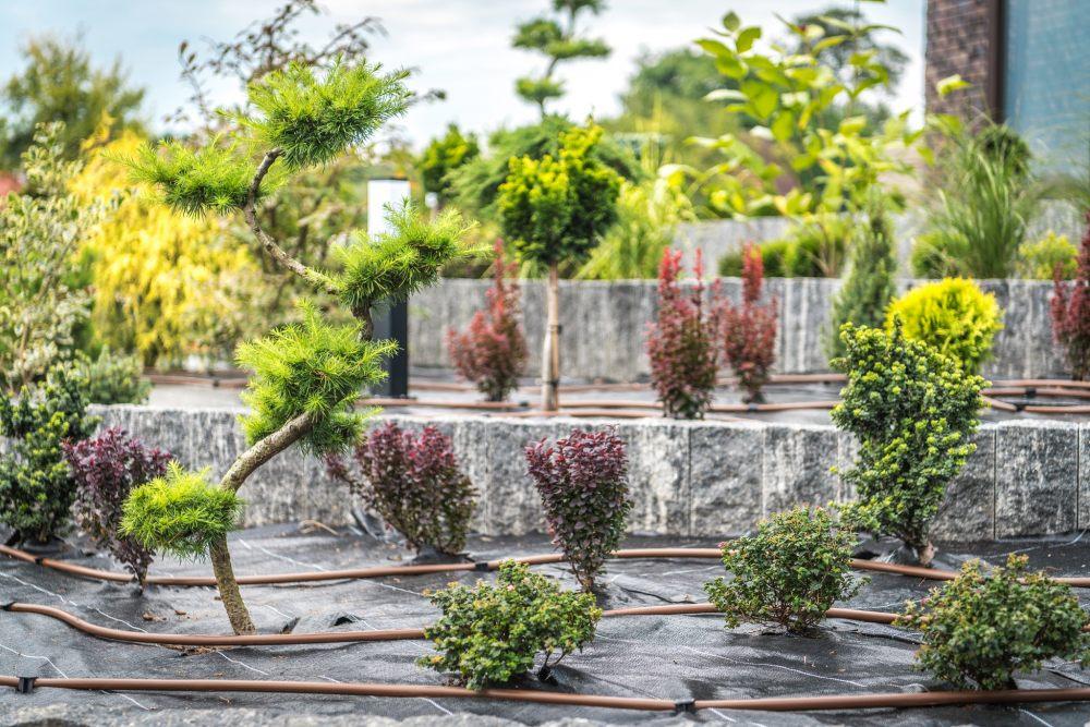 system-nawadniajacy-kropelkowy-w-ogrodzie