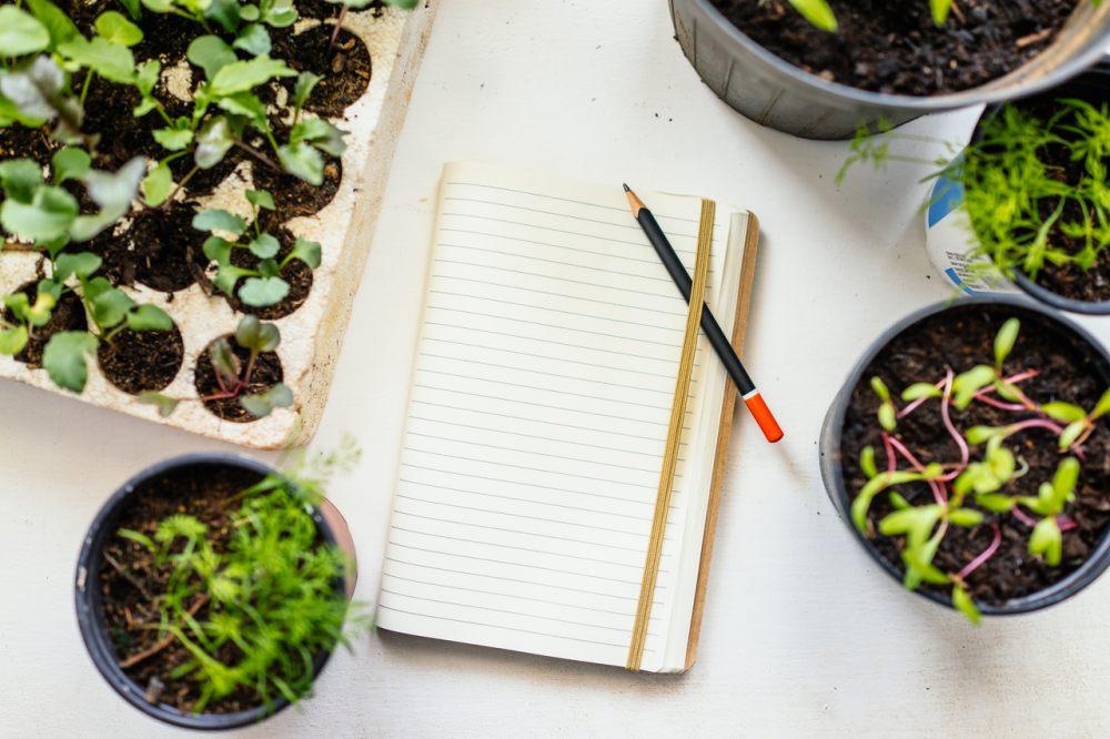 ogrodek-warzywny-planowanie