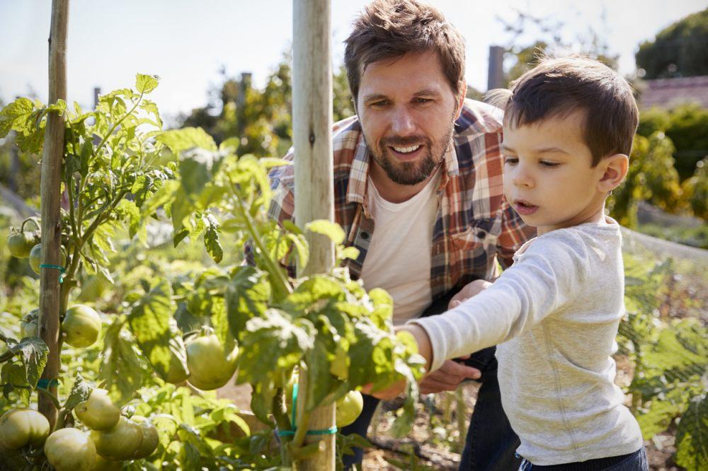 Twój własny ogródek warzywny krok po kroku 1