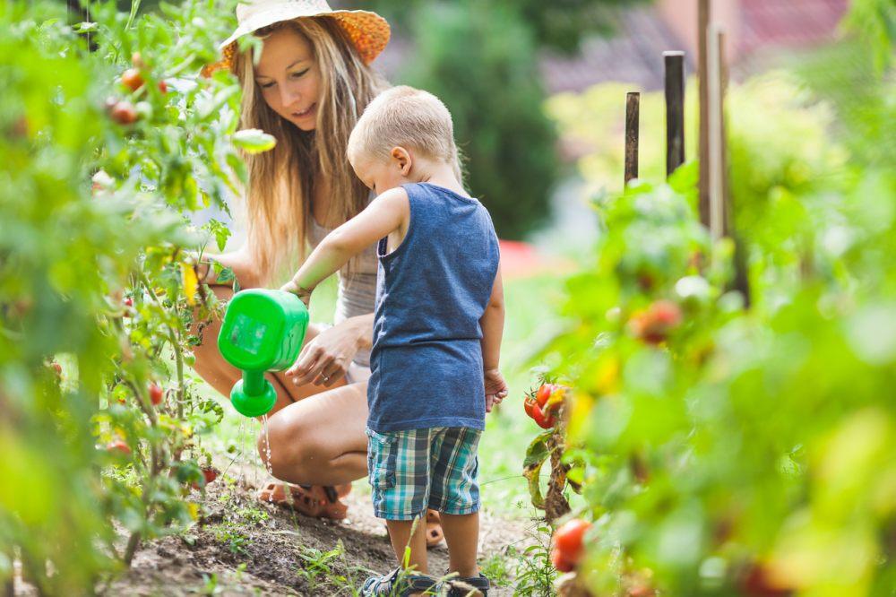 podlewanie-ogrodka-warzywnego