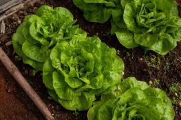 Twój własny ogródek warzywny krok po kroku