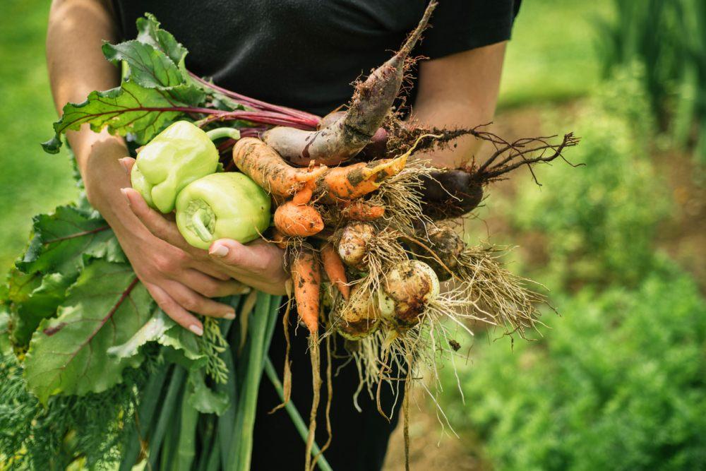 warzywa-z-wlasnego-ogrodka
