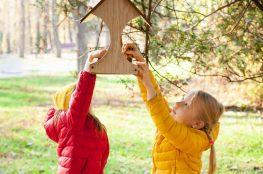 Sprawdzone pomysły, jak zrobić karmnik dla ptaków