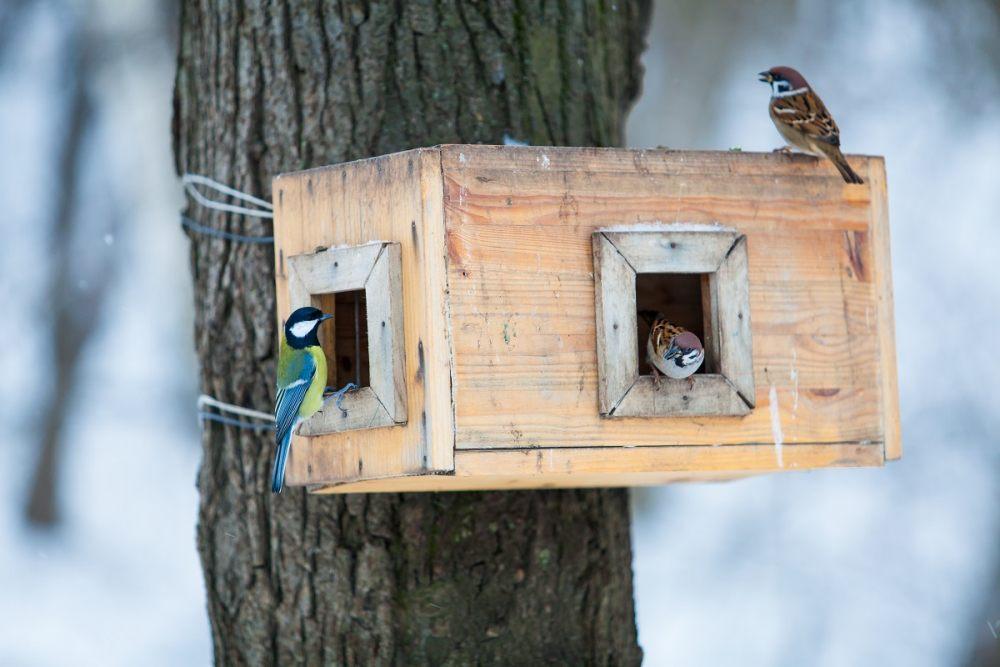 karmnik-dla-ptakow-na-drzewie