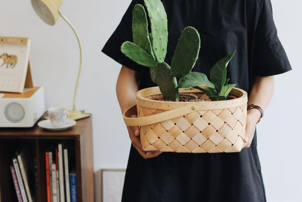 Kobieta trzyma w rękach koszyk z kaktusem