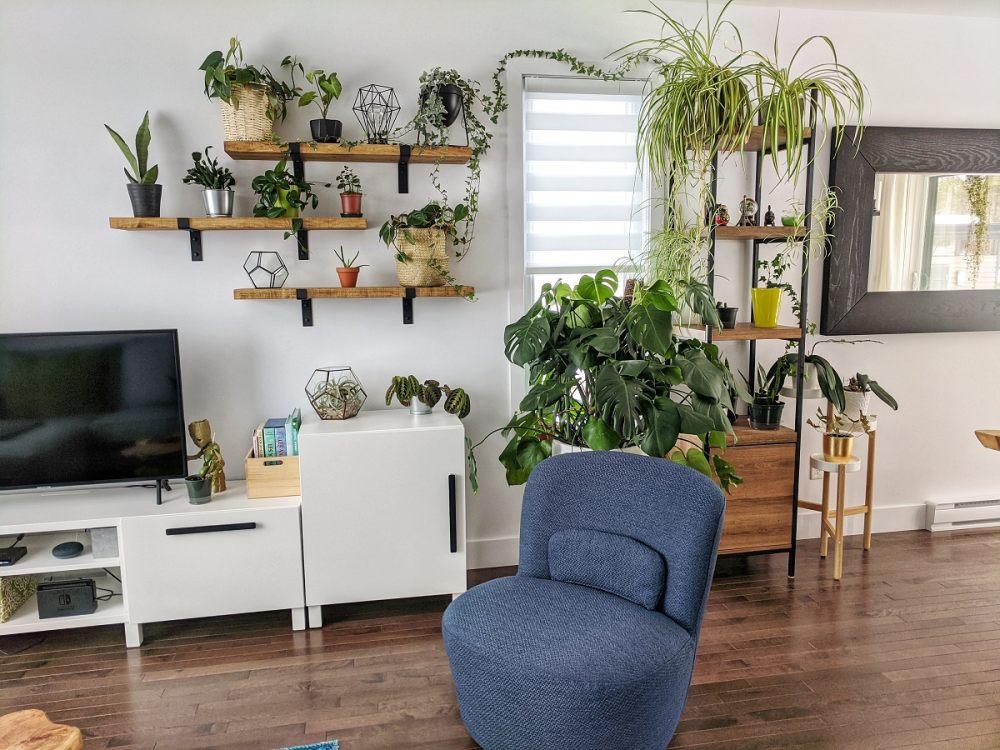 Rośliny doniczkowe ustawione na półkach wiszących.