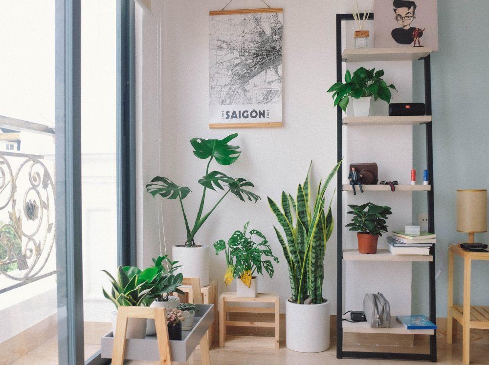 Rośliny doniczkowe w salonie.