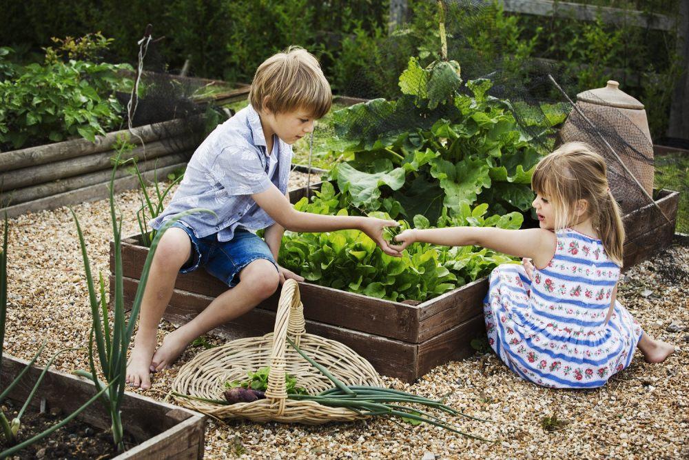 domowy-warzywnik-dzieci-pomagaja-przy-skrzyniach-na-warzywa