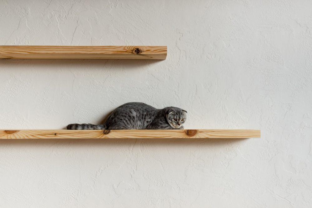 Kot na półce ściennej